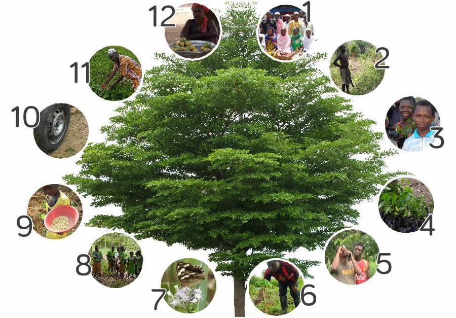 Mahogany tree circles by smaller photos of CS activities