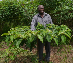 Mr Sackey with a 1 year old Ofram tree
